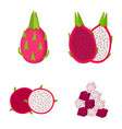 dragon fruit whole fruit half and slices vector image vector image