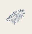 fresh fig badge fruit foliage label or logo vector image vector image