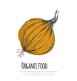 Hand drawn onion over white background vector image vector image