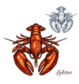 lobster isolated sketch for seafood design vector image vector image