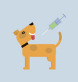vaccination dog vector image vector image