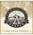Vintage grapes harvest label vector image