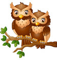 cute couple owl on the tree branch vector image vector image