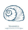 Seashell Drawing vector image vector image