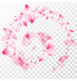 spring blossom isolated petals flying vector image