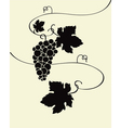 wild grapes vector image vector image