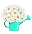 Bouquet of daisies in green garden watering can vector image vector image