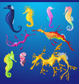 seahorse seafish character or cartoon sea vector image