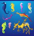 seahorse seafish character or cartoon sea vector image vector image