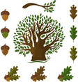 set of icons on an oak tree with leaves and acorns vector image vector image