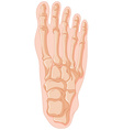 Gout in human bone vector image vector image