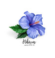realistic hibiscus flower leaves blue vector image vector image
