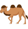 cute camel cartoon isolated on white background vector image