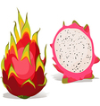 dragon fruit vector image vector image
