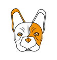 isolated french bulldog design vector image vector image