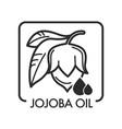 jojoba oil healing organic natural product for vector image