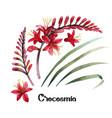 watercolor crocosmia collection vector image vector image