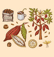 cocoa beans and hot chocolate natural organic vector image vector image