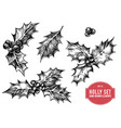 collection of hand drawn holly vector image