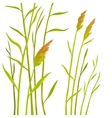 Reed isolated on white background vector image vector image