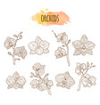 orchid flowers hand drawn set vector image