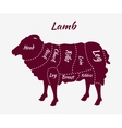 cuts lamb or mutton diagram vector image vector image