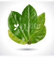 green leaves realistic eco vector image vector image