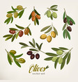 olive branches with foliage and berries vector image vector image