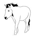 Przewalskis horse vector image
