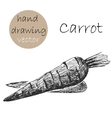 Hand Drawn carrot Monochrome sketch vector image