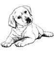 Labrador Retriever puppy vector image vector image