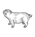 piggy animal sketch engraving vector image