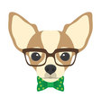 Portrait of chihuahua dog with glasses and bow tie vector image