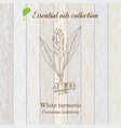 pure essential oil collection turmeric wooden vector image vector image