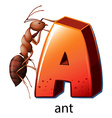 A letter A for ant vector image vector image