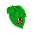 Green leaves with ladybird and water drops vector image vector image