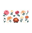 set gorgeous colorful peonies and vector image