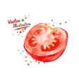 Half of tomato vector image