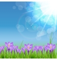 Happy Easter Card with Crocuses vector image