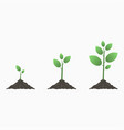 tree growth vector image vector image