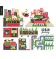 urban farming and gardening set vector image