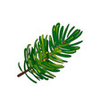 hand drawn fir tree twig branch spruce vector image
