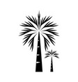 palm trees silhouette vector image
