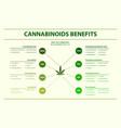 cannabinoids benefits horizontal infographic vector image vector image