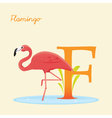 F for flamingo vector image