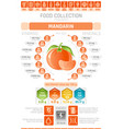 food infographics poster mandarin fruit vector image vector image