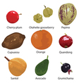 fruits on white background vector image vector image