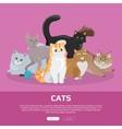 Cats Breeds Flat Web Banner vector image