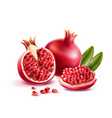 realistic pomegranate with seeds and leaves vector image vector image