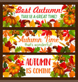thanksgiving banner set autumn harvest holiday vector image vector image